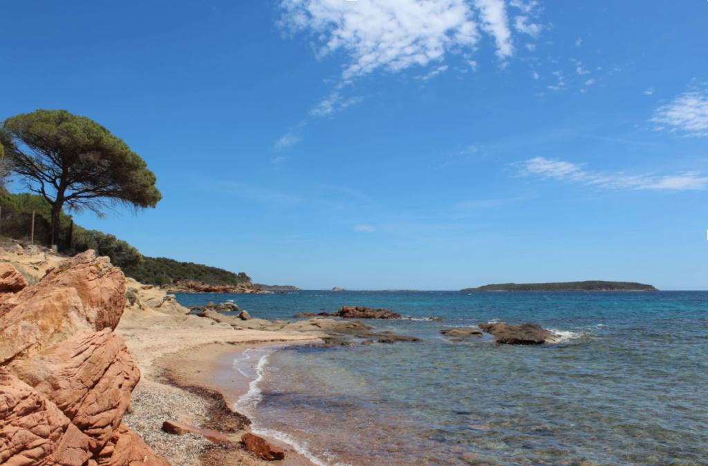 Plage, ciel bleu et pin parasol en Corse