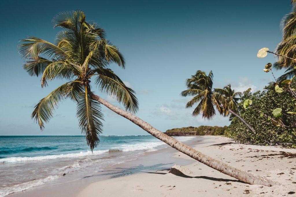 Les plages de Martinique : palmier, sable blanc et mer transparente