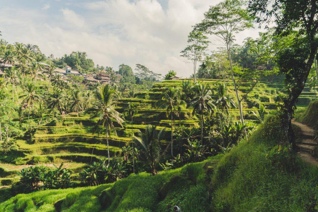 Les rizières de Bali à Ubud en Indonésie