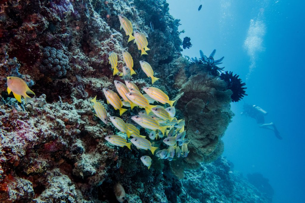 Les fonds marins en plongée bouteille à Gili en Indonésie
